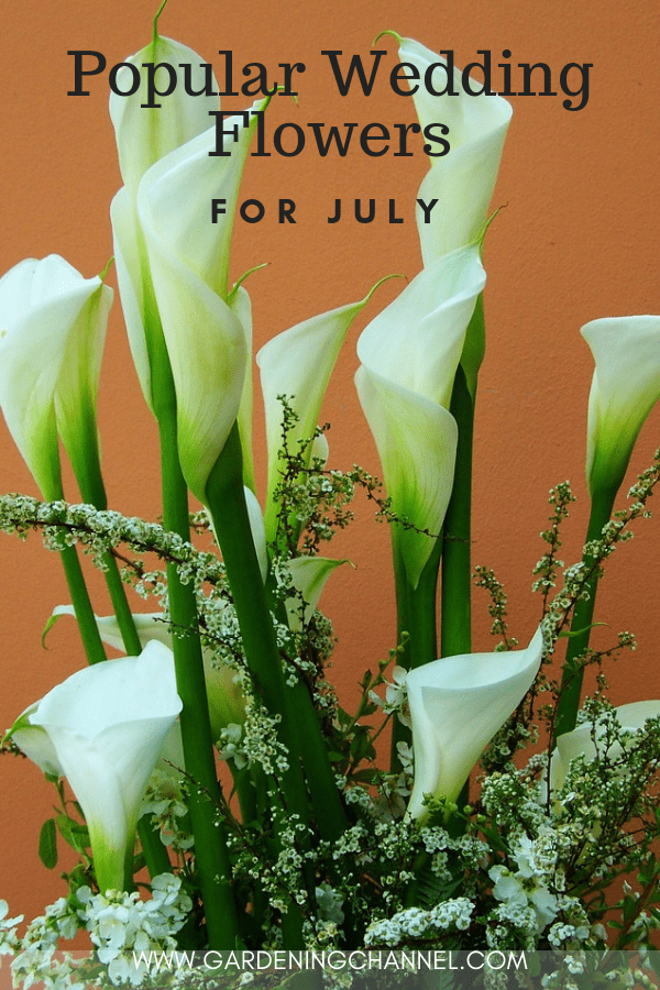 calla lily flower with text overlay popular wedding flowers for july
