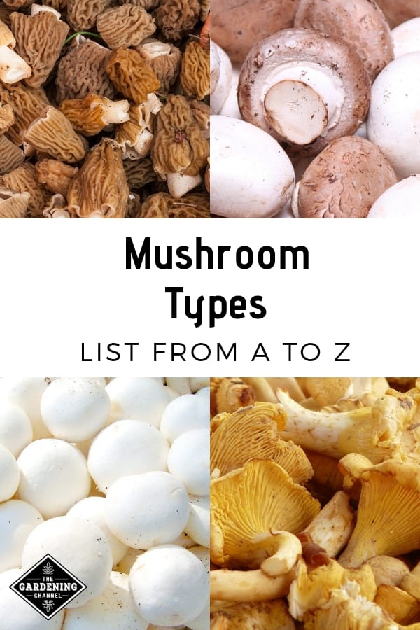 chantrelles cremini morels and buttom mushrooms with text overlay mushroom types list from a to z
