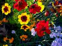 What Do Different Flower Names Mean? - Gardening Channel