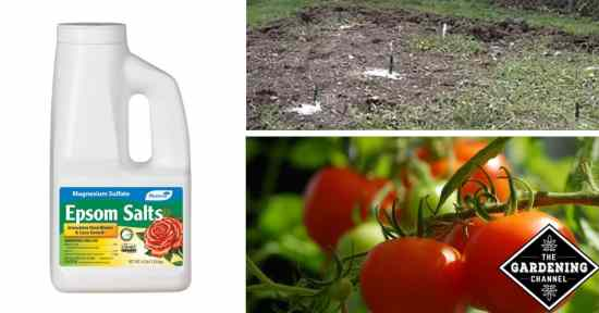 epsom salt in the garden