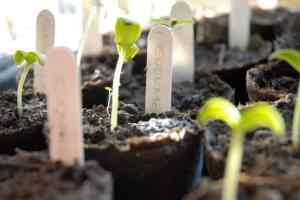 Lose Weight by Growing Your Own Vegetables