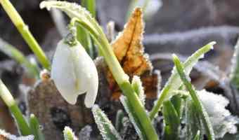 last frost freeze date
