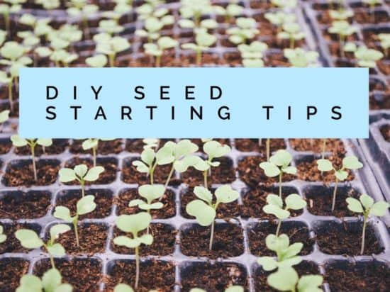Seed starting tips