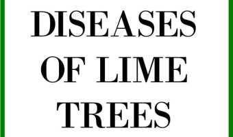 Common Diseases of Lime Trees