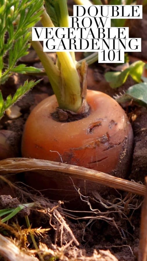 guide to double row vegetable gardening