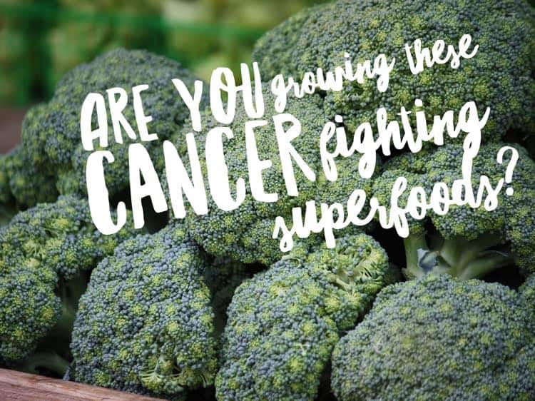 Healthiest Vegetables for Cancer Prevention