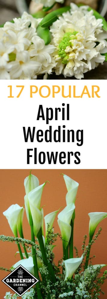 white hyacinths and white Calla lilies with text overlay 17 popular april wedding flowers