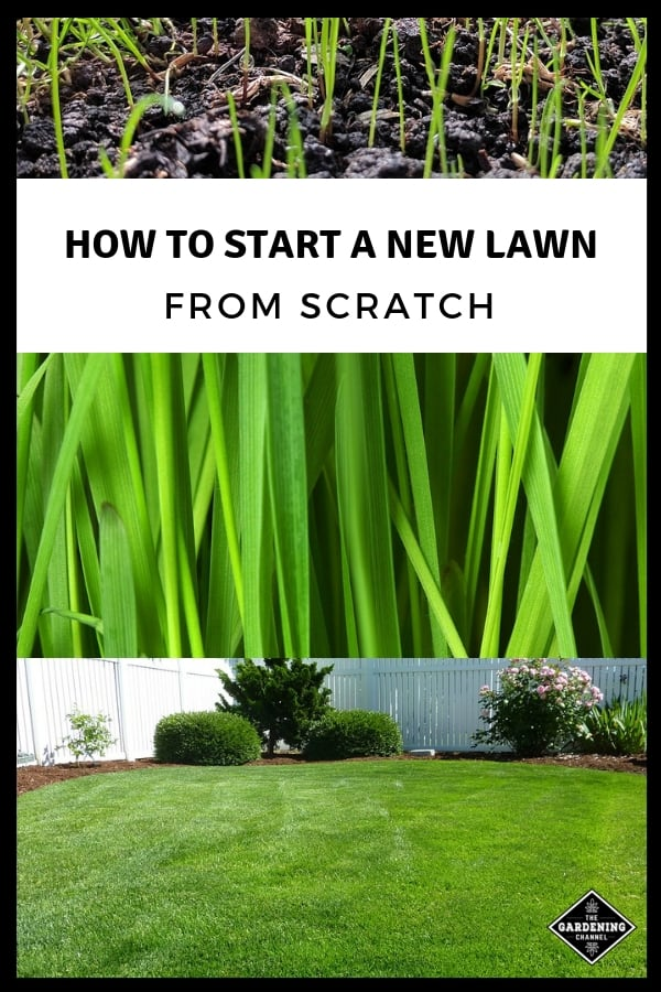 grass seeds grass and backyard lawn with text overaly how to start a new lawn from scratch
