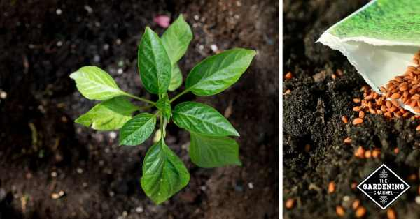 how to have healthy garden soil