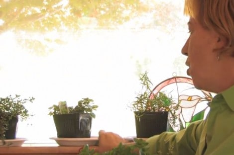 indoor herb garden on a windowsill