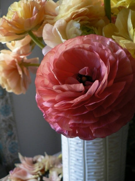 Full-bloom ranunculus