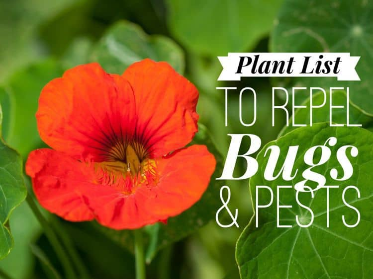 Plants That Repel Bugs and Pests - Gardening Channel