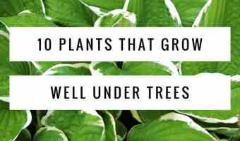 plants that grow under trees