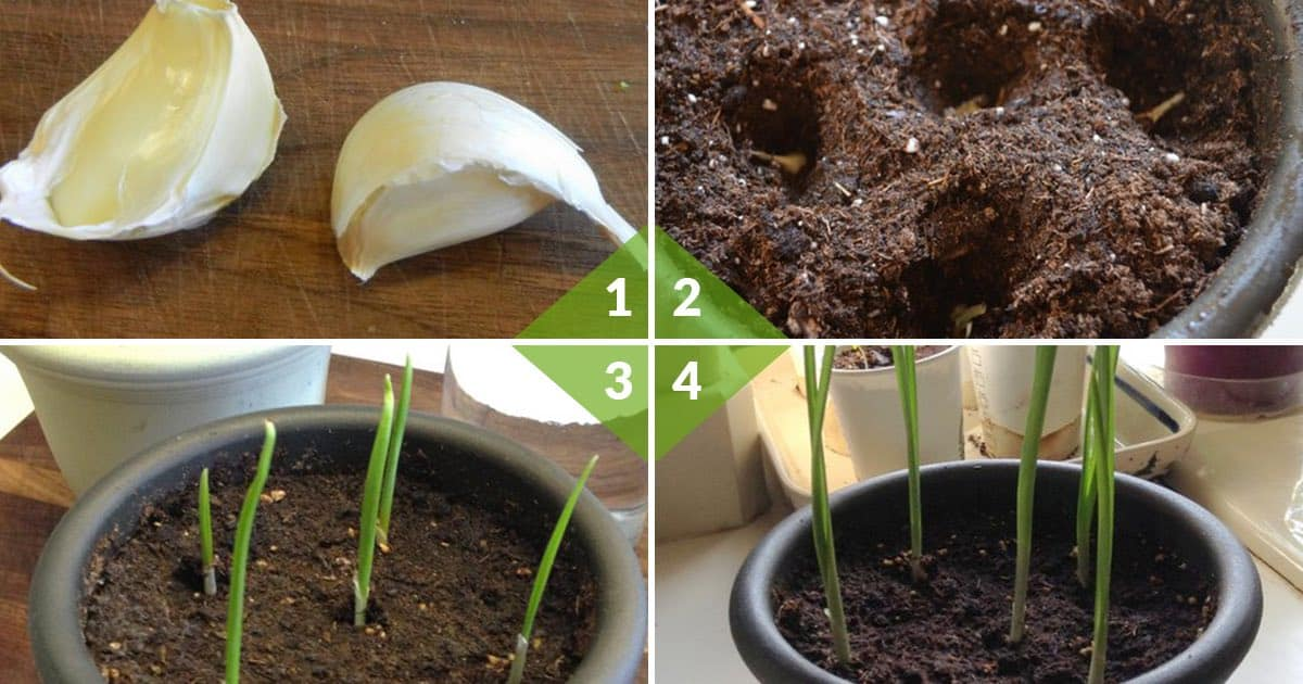 7 fruits and vegetables that can be re-grown from scraps ... Growing Vegetables From Scraps