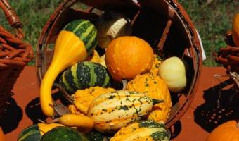 A Guide to Growing Winter Squash