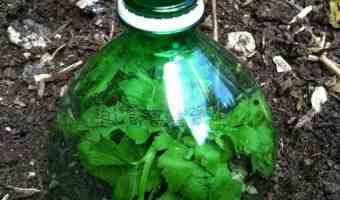 Protect Tender Seedlings with these 4 Easy DIY Ideas