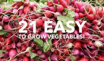 21 Easy-to-Grow Vegetables