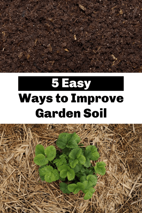 compost and straw mulch around strawberry plant with text overlay five easy ways to improve garden soil