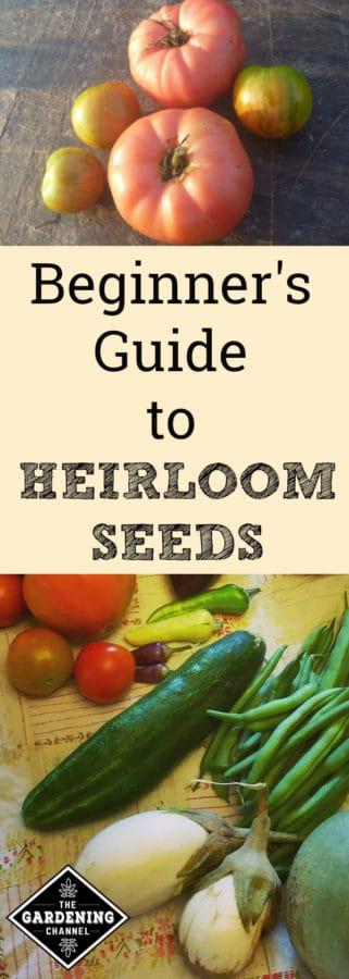 beginners guide to growing heirloom seeds
