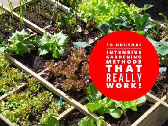 10 crazy intensive gardening methods that actually work