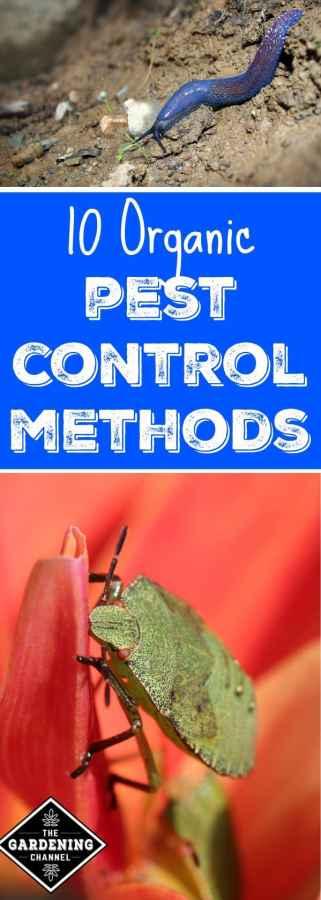 10 organic pest control methods