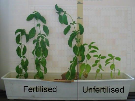 The plant on the left has been fertilized by urine