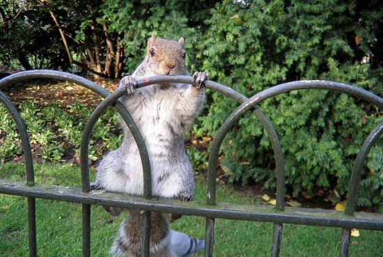 Squirrels can be tricky to evict from gardens
