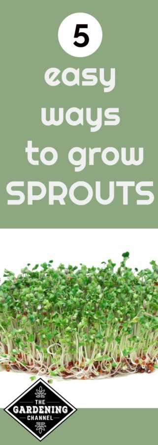 easy ways to grow sprouts