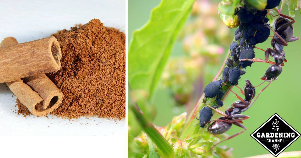 Natural Ways To Get Rid Of Ants In Your Vegetable Garden