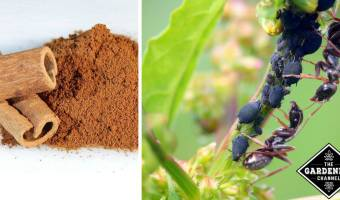 Natural Ways to Get Rid of Ants