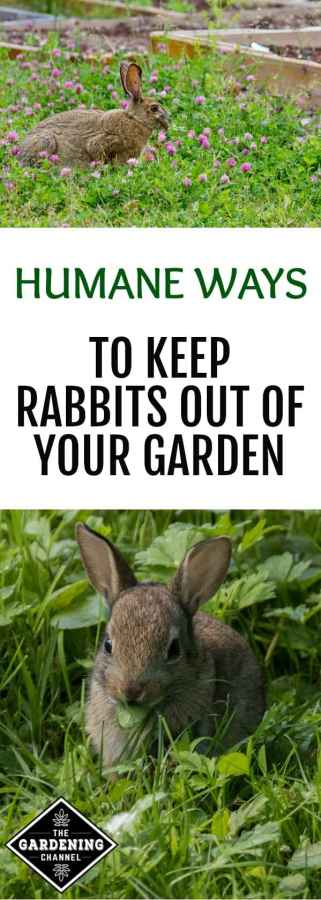 4 humane ways to keep rabbits out of the garden - How to keep rabbits out of a garden ...