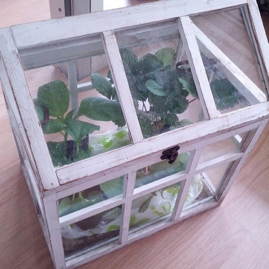 Make A Mini Greenhouse Diy Coldframe Ideas Gardening Channel