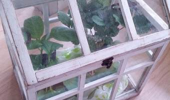 Make a mini greenhouse
