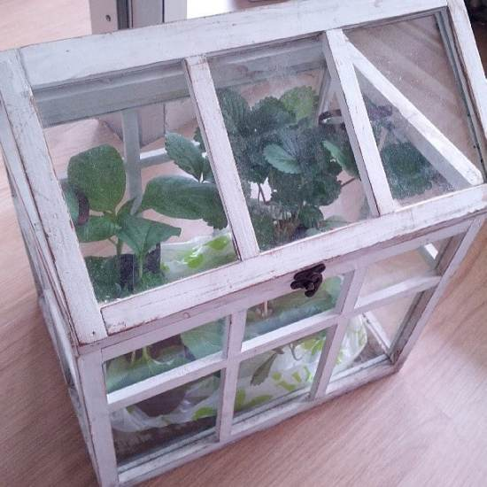 Make a mini greenhouse