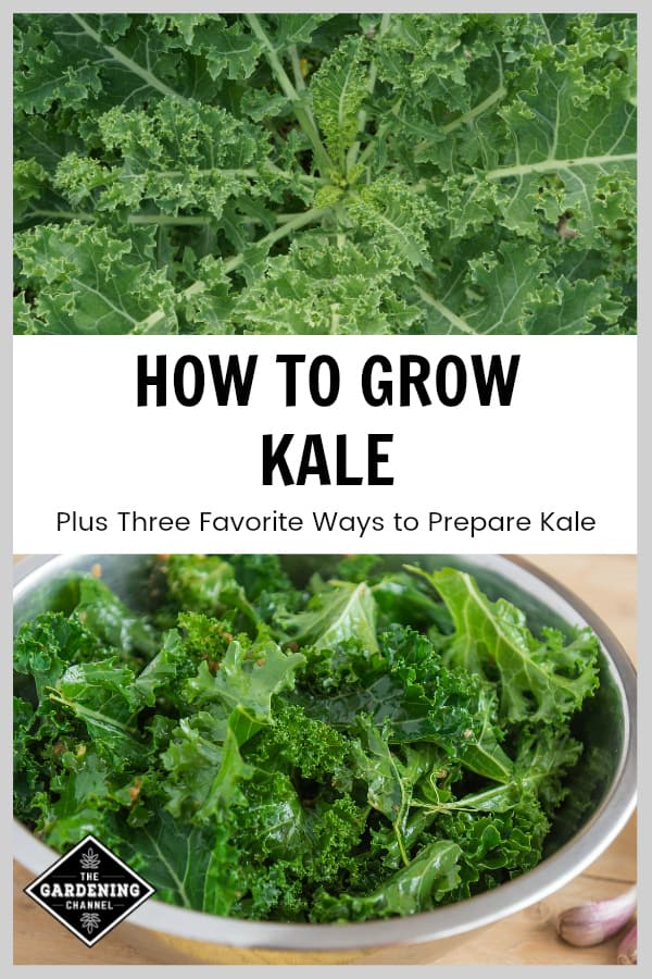 How To Grow Kale Including Three Favorite Ways To Prepare