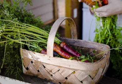 Growing Rainbow Carrots Health Benefits And Varieties By