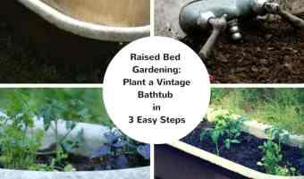 Easy Raised Bed Garden Idea: Plant a Vintage Bathtub