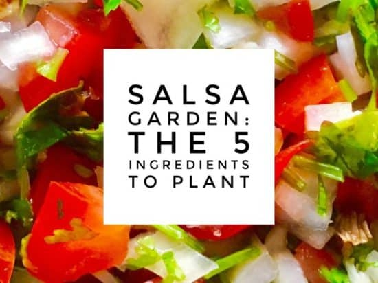 Plant a Salsa Garden The Five Ingredients to Grow for Fresh