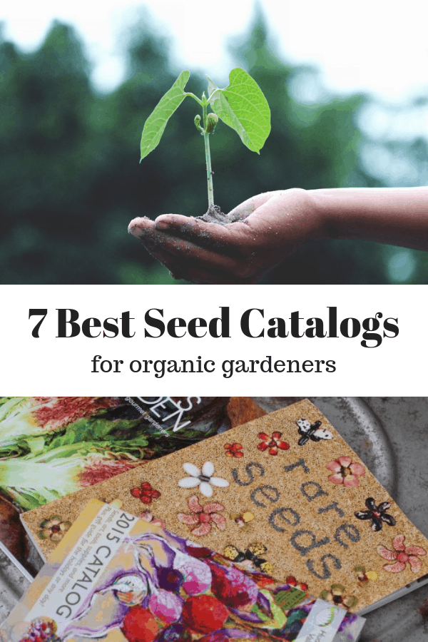 seedling growing in hand garden seed catalogs with text overlay seven best seed catalogs for organic gardeners