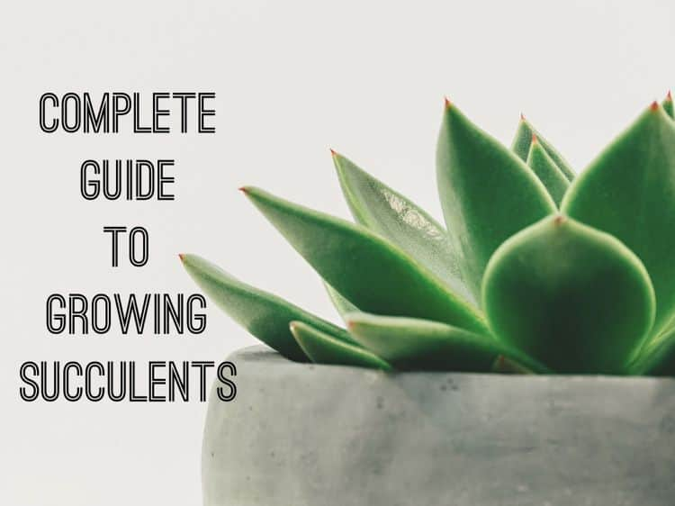 complete guide to houseplants pdf