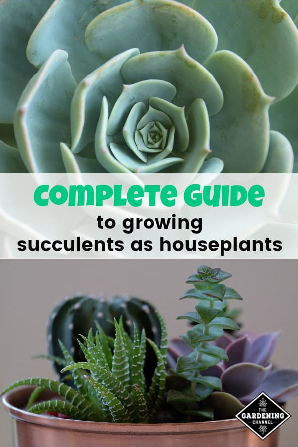 succulent and succulent in cooper planter with text overlay complete guide to growing succulents as houseplants