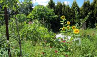 Why You Need Fertile Soil to Successfully Grow Vegetables