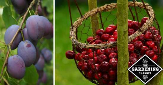 How to Start a Backyard Orchard
