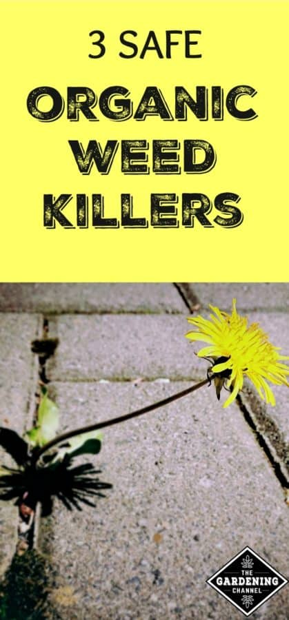 3 safe organic weed killers to use in your garden