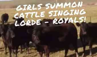lorde royals attract cattle singing