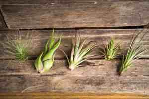 best gardening gift air plants