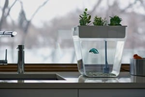 best gardening gifts aquaponics