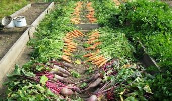 7 Habits of Highly Productive Gardeners