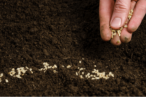 Planting Seeds for Productive Gardeners