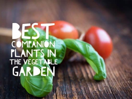 best companion plants for a vegetable garden list